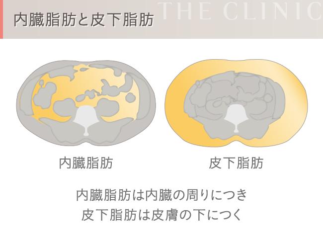 内臓脂肪と皮下脂肪の違い